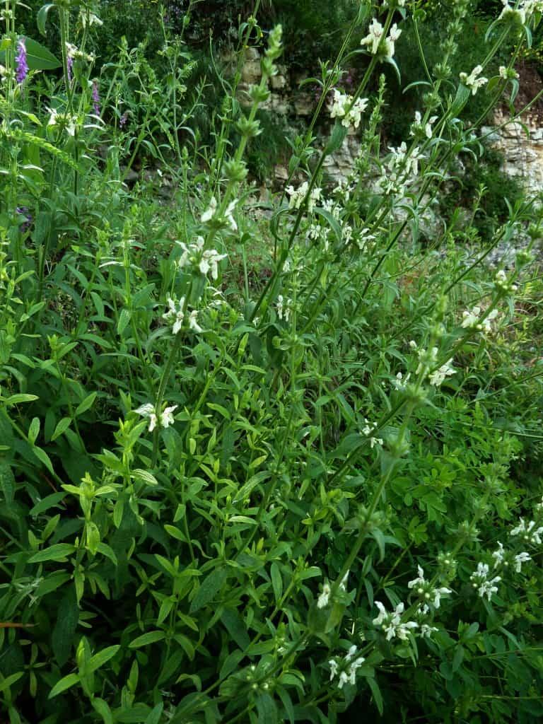 Le cure della medicina popolare nelle campagne e sulle montagne pistoiesi