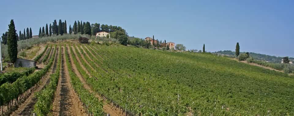 Vino pistoiese: un'evoluzione basata sulla qualità